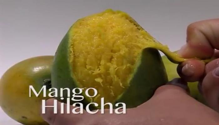 Mango hilacha