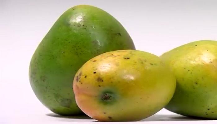 El mango, fruta tropical y subtropical.