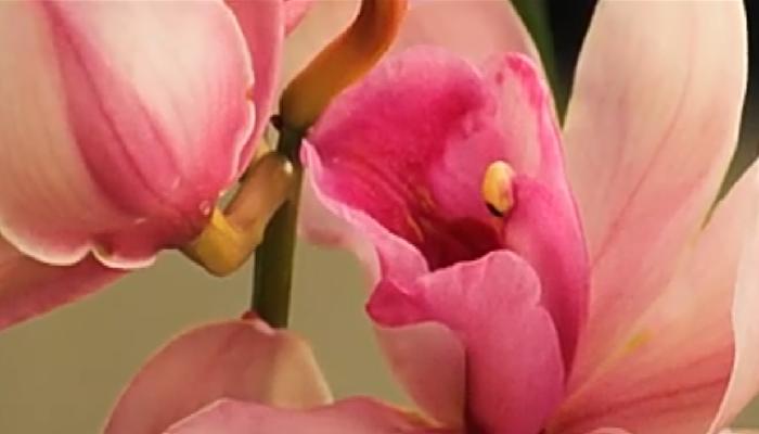 Las Orquídeas, tipos, cuidados y cultivos