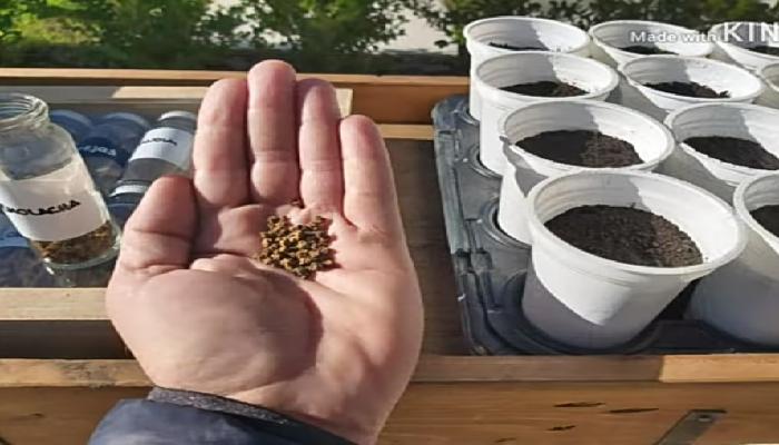 Cómo cultivar remolachas en casa, guía y consejos