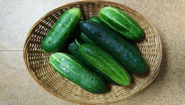 Pepinos, consejos para el cultivo y cosecha