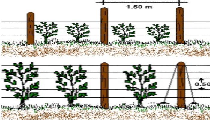 Tutorado de plantas, tipos y beneficios