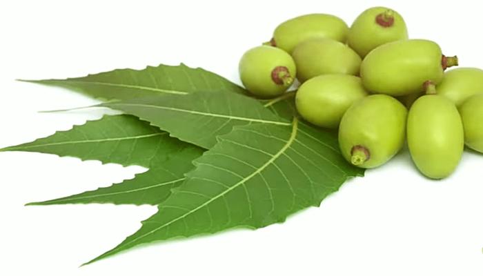 Insecticida de neem, propiedades y recetas.