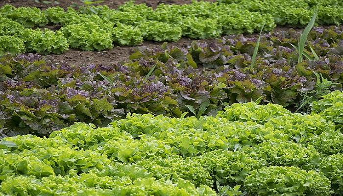 Asociación de cultivos, beneficios